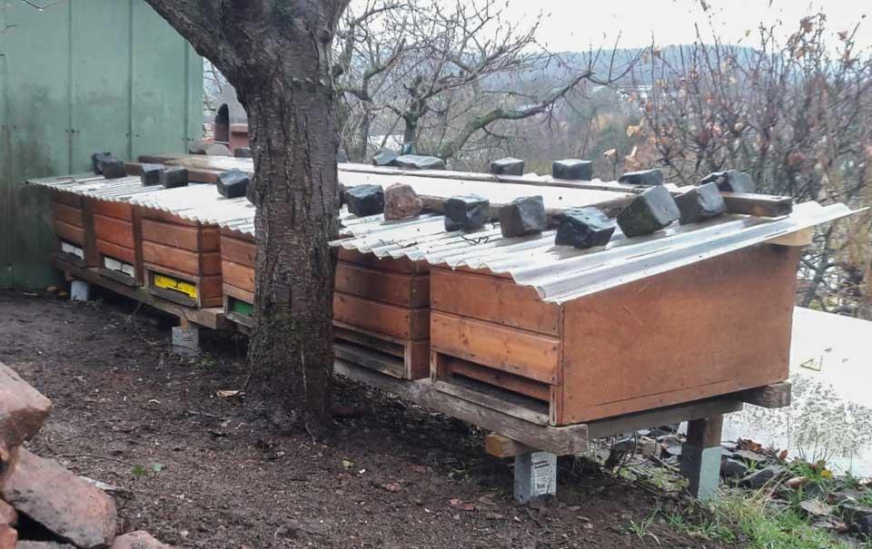 garten bienen mobilitätundzukunft tier insekten tier
